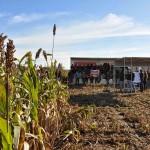 13 EF Ameghino Parada 1 25 150x150 Sintonía práctica para el manejo de alfalfa y sorgo en el Oeste