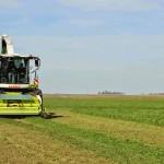 13 EF Ameghino Parada 2 78 150x150 Sintonía práctica para el manejo de alfalfa y sorgo en el Oeste