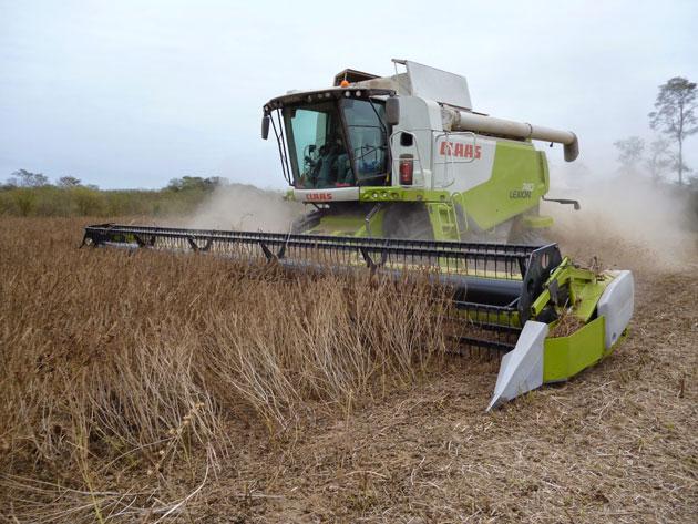 1 opt En el Norte buscan reemplazar a la soja