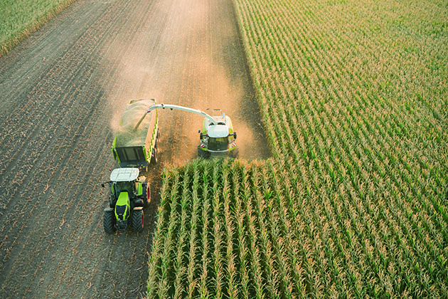 283138 3 opt Cómo hacer silaje de maíz de alta calidad