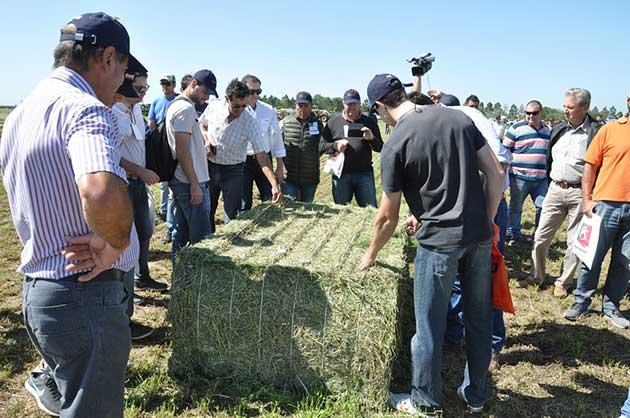 EF Sunchales 5 192 opt Córdoba se afianza como un polo exportador de alfalfa