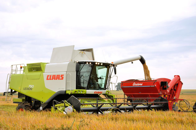 """Lexion 750 arroz 53 opt """"Con menos máquinas crecimos en capacidad de trabajo"""""""