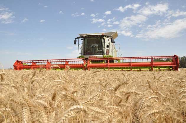 Lexion 760 Trigo 37 opt Las nuevas Lexion ya cosechan en los campos argentinos
