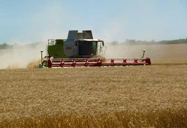P1000483 opt Cambiaron los granos<br/>por los fierros
