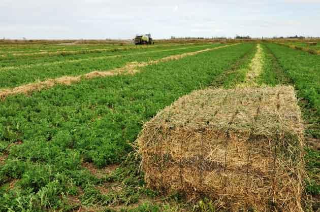 Quadrant 2200 opt El negocio de exportar pasto