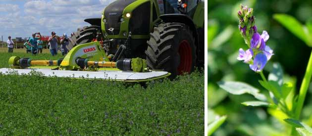 alfalfa colage 2 CLAAS despide el 2018 con nuevas experiencias