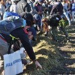 sm 6 19 nota1 11 150x150 Todo el proceso productivo de la alfalfa y el maíz en una jornada a campo